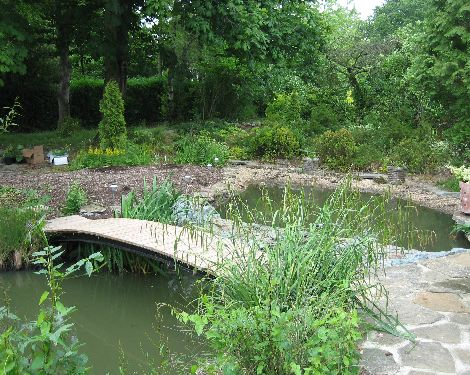 Thepondlifeco design construction and refurbishment of for Natural pond plants